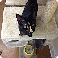 Adopt A Pet :: Evie - Lake Charles, LA