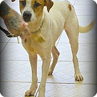 Adopt A Pet :: Billy - Miami, FL