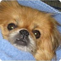 Adopt A Pet :: Lucy - Tyler, TX