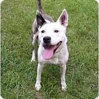 Adopt A Pet :: Pogo - Mocksville, NC