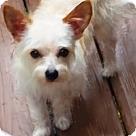 Adopt A Pet :: Mikey