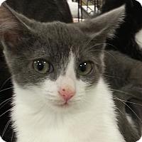 Petsmart Cat Adoption Contract