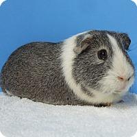 Adopt A Pet :: Cooper - Aurora, CO