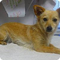 Adopt A Pet :: Mia - Manning, SC