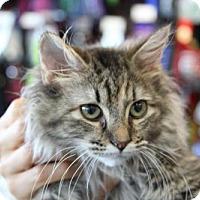 Adopt A Pet :: Miss Muffin - Potomac, MD
