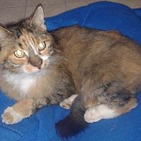 Adopt A Pet :: Camille - Elk Grove, CA