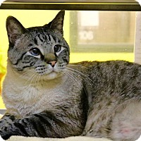 Adopt A Pet :: Puck (declawed) - Chattanooga, TN