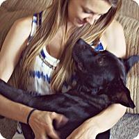 Adopt A Pet :: Boca - Huntsville, AL