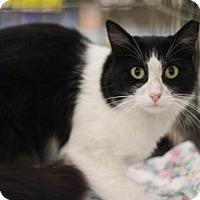 Adopt A Pet :: Athena - Sacramento, CA