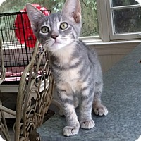 Adopt A Pet :: Anchovy - Mobile, AL
