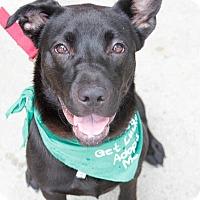Adopt A Pet :: Wilba - Washington, DC