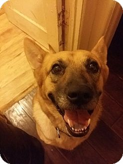 German Shepherd Dog Dog for adoption in BONITA, California - Sandy