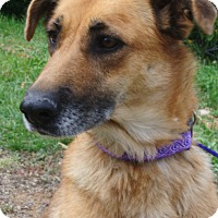Adopt A Pet :: Timber - Durango, CO