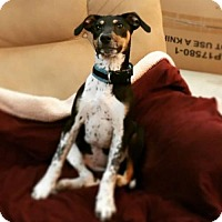 Terrier (Unknown Type, Medium) Mix Puppy for adoption in Keyport, New Jersey - Toots