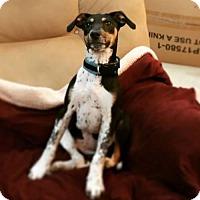 Adopt A Pet :: Toots - Keyport, NJ
