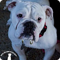 Adopt A Pet :: Ellie - Baton Rouge, LA