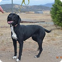 Adopt A Pet :: Faith - Yreka, CA