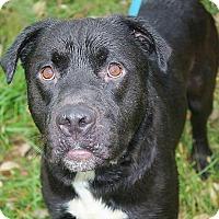 Adopt A Pet :: Dallas - Springfield, MO