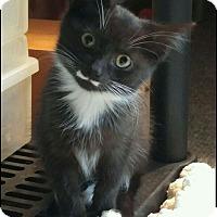 Adopt A Pet :: Stash - Oakland Gardens, NY