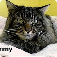 Adopt A Pet :: Tammy - Medway, MA