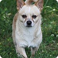Adopt A Pet :: Blake - Brattleboro, VT