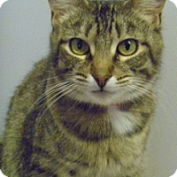 Adopt A Pet :: Connie - Hamburg, NY