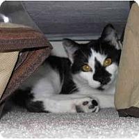Adopt A Pet :: C.C. - Davis, CA