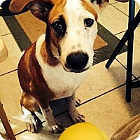 Adopt A Pet :: Lucy - Miami, FL