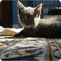 Adopt A Pet :: Willow - Frenchtown, NJ