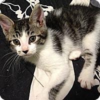 Adopt A Pet :: Toby - Acme, PA