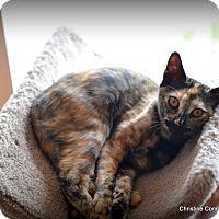 Adopt A Pet :: Lola - Island Park, NY