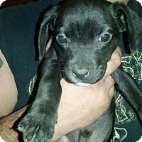 Adopt A Pet :: Sid - Broken Arrow, OK