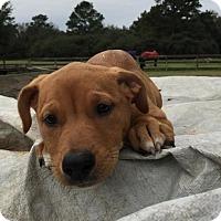 Adopt A Pet :: Matilda - Houston, TX