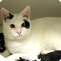 Adopt A Pet :: Cho - Medina, OH