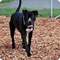 Adopt A Pet :: ACE - McKinleyville, CA