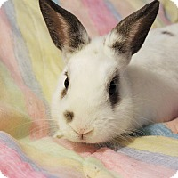 Adopt A Pet :: Spanky - Hillside, NJ