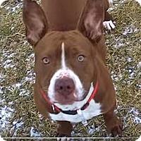 Adopt A Pet :: Claudette - Troy, MI