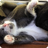 Adopt A Pet :: Thufir - Knoxville, TN