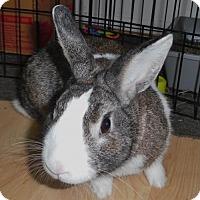 Adopt A Pet :: Kevin - Newport, KY