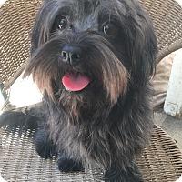 Adopt A Pet :: Daphnie - Van Nuys, CA