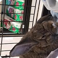 Adopt A Pet :: Lexi - Kenosha, WI