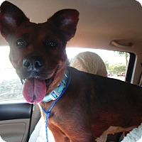 Adopt A Pet :: MOCHA - Orange Park, FL