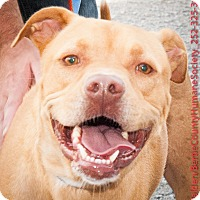 Adopt A Pet :: COOKIE - Powellsville, NC