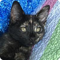 Adopt A Pet :: Bitsy - La Canada Flintridge, CA