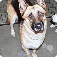 Adopt A Pet :: German Shepherd fem - San Jacinto, CA