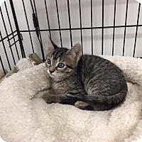 Adopt A Pet :: Poppy - Tehachapi, CA