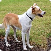 Adopt A Pet :: STANLEY LOVES KIDS - richmond, VA