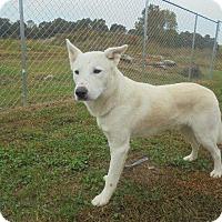 Adopt A Pet :: Max - Springfield, TN