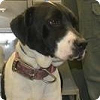 Adopt A Pet :: Rodeo - Sharon, CT