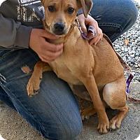 Adopt A Pet :: 16-137 - Cadiz, OH